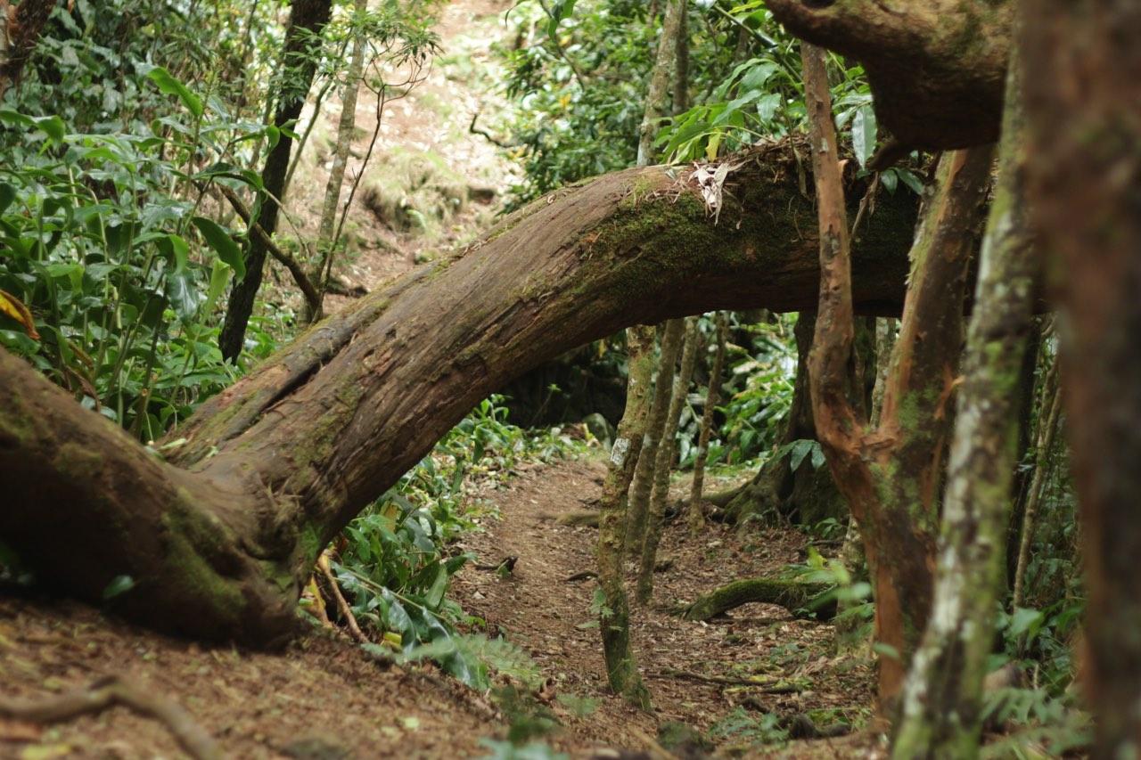 Une forêt digne d'un décor d'Harry Potter !